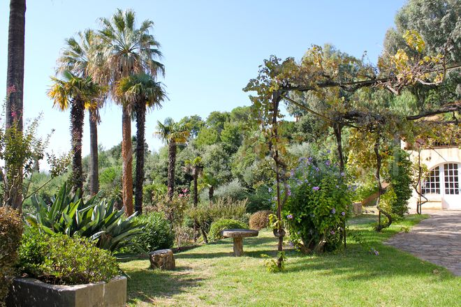 jardin de palmiers gallery of amnagement jardin paysager autour duune piscine amnagement jardin. Black Bedroom Furniture Sets. Home Design Ideas